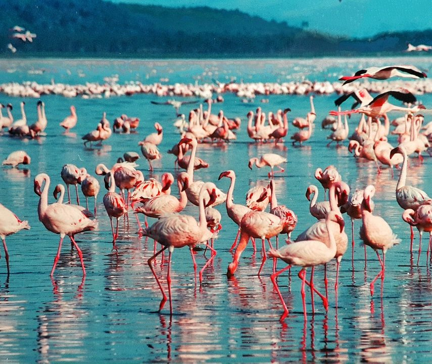 Lac Nakuru au Kenya