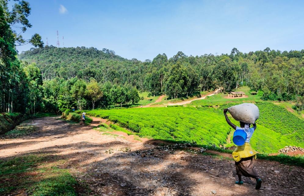 Parc Nyungwe au Rwanda